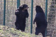 Zoo-Aschersleben-020410IMG_8913