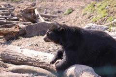 Zoo-Aschersleben-020410IMG_8924