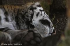 Zoo-Aschersleben-020410IMG_8931
