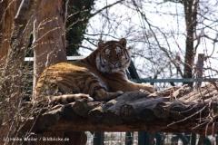 Zoo-Aschersleben-020410IMG_8936