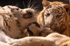 Zoo-Aschersleben-020410IMG_9008