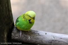 Zoo Aschersleben 030710-IMG_5795