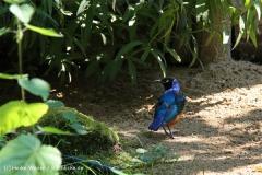 Zoo Aschersleben 030710-IMG_5805