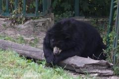Zoo Aschersleben 030710-IMG_5831