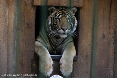 Zoo Aschersleben 030710-IMG_5864