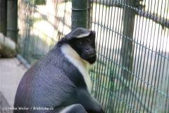 Zoo Aschersleben 030710-IMG_5886
