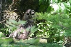Zoo Aschersleben 030710-IMG_5898