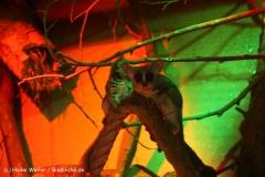 Zoo Aschersleben 030710-IMG_5984
