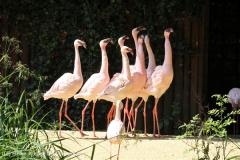 Zoo_Aschersleben_080814_copy_Heike_Weiler_IMG_4590