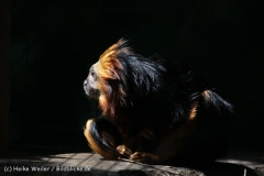 Zoo_Aschersleben_080814_copy_Heike_Weiler_IMG_4615