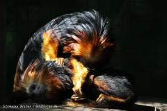 Zoo_Aschersleben_080814_copy_Heike_Weiler_IMG_4620