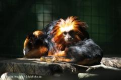 Zoo_Aschersleben_080814_copy_Heike_Weiler_IMG_4628