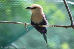 Zoo_Aschersleben_080814_copy_Heike_Weiler_IMG_4636