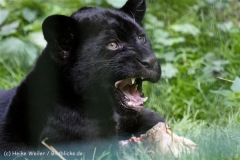 Zoo_Aschersleben_080814_copy_Heike_Weiler_IMG_4756