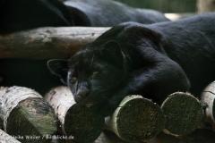 Zoo_Aschersleben_080814_copy_Heike_Weiler_IMG_4797