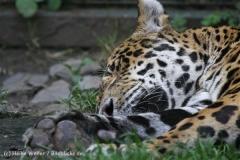 Zoo_Aschersleben_080814_copy_Heike_Weiler_IMG_4894