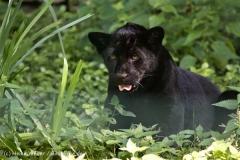 Zoo_Aschersleben_080814_copy_Heike_Weiler_IMG_4936