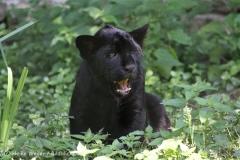 Zoo_Aschersleben_080814_copy_Heike_Weiler_IMG_4959