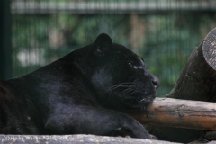 Zoo_Aschersleben_080814_copy_Heike_Weiler_IMG_4962