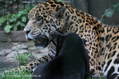 Zoo_Aschersleben_080814_copy_Heike_Weiler_IMG_4977
