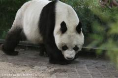 Zoo Berlin270710 - 100IMG_9603