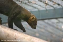 Zoo Berlin270710 - 100IMG_9609