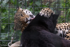 Zoo Berlin270710 - 100IMG_9637
