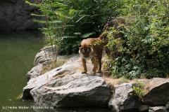 Zoo Berlin270710 - 100IMG_9679