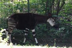 Zoo Berlin270710 - 100IMG_9776