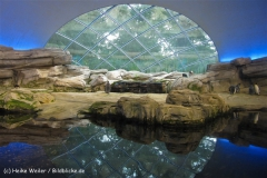 Zoo Berlin270710 - 100IMG_9790_1573