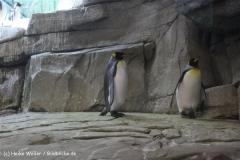 Zoo Berlin270710 - 100IMG_9791