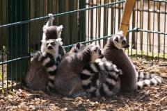 Zoo-Braunschweig-060410-IMG_9421