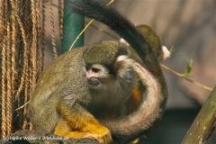 Zoo-Braunschweig-060410-IMG_9436