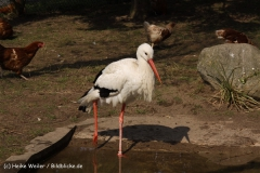 Zoo-Braunschweig-060410-IMG_9502