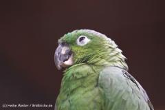 Zoo-Braunschweig-060410-IMG_9549