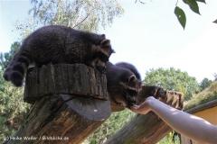 Zoo Braunschweig 080909IMG_0381