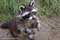 Zoo Braunschweig 080909IMG_0382