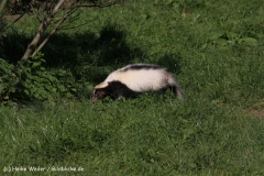 Zoo Braunschweig 080909IMG_0407