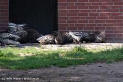 Zoo Braunschweig 080909IMG_0438