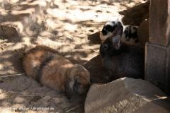 Zoo Braunschweig 080909IMG_0455