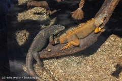 Zoo Braunschweig 080909IMG_0517