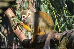Zoo Braunschweig 080909IMG_0542