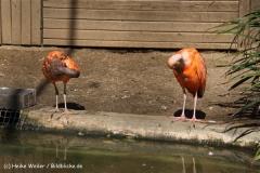 Zoo Braunschweig 080909IMG_0607