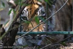Zoo Braunschweig 080909IMG_0652