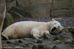 Zoo_Bremerhaven_180515_IMG_4798