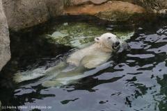 Zoo_Bremerhaven_180515_IMG_4848