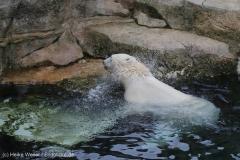 Zoo_Bremerhaven_180515_IMG_4855