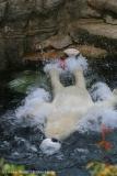 Zoo_Bremerhaven_180515_IMG_4897