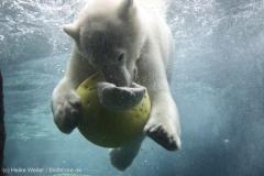 Zoo_Bremerhaven_180515_IMG_4922_9653