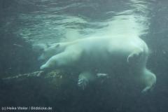 Zoo_Bremerhaven_180515_IMG_4922_9695